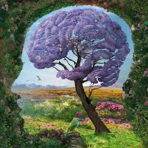 Cerebro, cuerpo y emoción… ¿alguna relación?